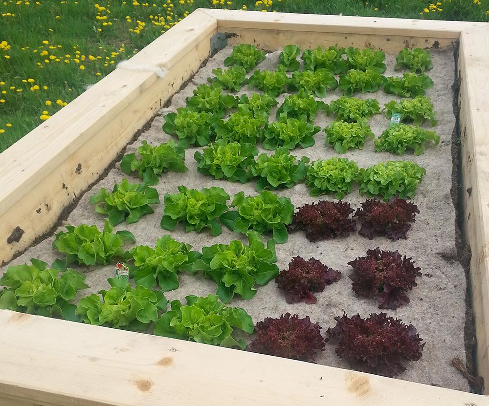 vegetable garden liner, garden liner, wool liner, nutrition liner, plant liner